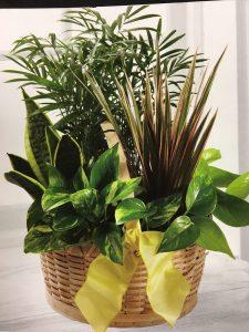 Plant Garden - $60-$100